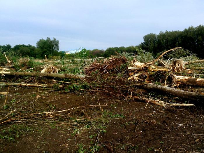 Уничтожают роще в Александровке